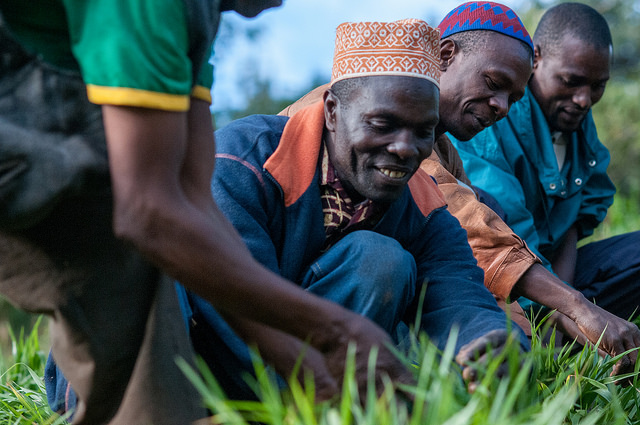 Farmers in Lushoto, in the Tanga region of Tanzania, are working with researchers to test different forage varieties like Brachiaria for yield and drought resilience. (Photo: Georgina Smith/CIAT)