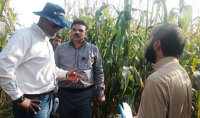AbduRahman Beshir (L), Muhammad Aslam (M) and Amir Maqbool (R), CIMMYT's Ph.D. student who completed his study on provitamin A (PVA) enriched maize during field evaluation of PVA hybrids at UAF. (Photo: M. Waheed/CIMMYT)