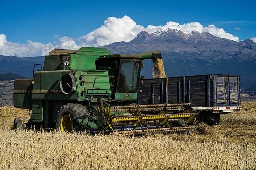 Wheat harvest near Iztaccíhuatl volcano in Juchitepec, Estado de México. (Photo: P. Lowe/CIMMYT)