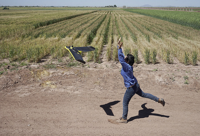 A UAV is launched to collect data from a field in CIMMYT's experiment station in Ciudad Obregón, Mexico. Photo: CIMMYT/ Peter Lowe