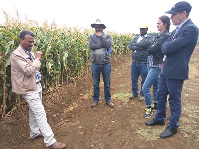 NuME project leader briefing the delegation from Global Affairs Canada on QPM seed production. (Photo: CIMMYT)
