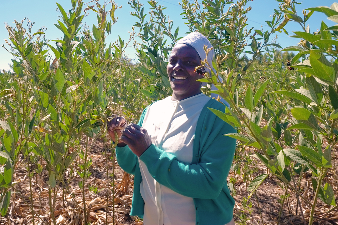 Farmer Eveline Musafari intercrops maize and a variety of legumes on her entire farm. She likes the ability to grow different food crops on the same space, providing her family with more food to eat and sell. (Photo: Matthew O'Leary/CIMMYT)