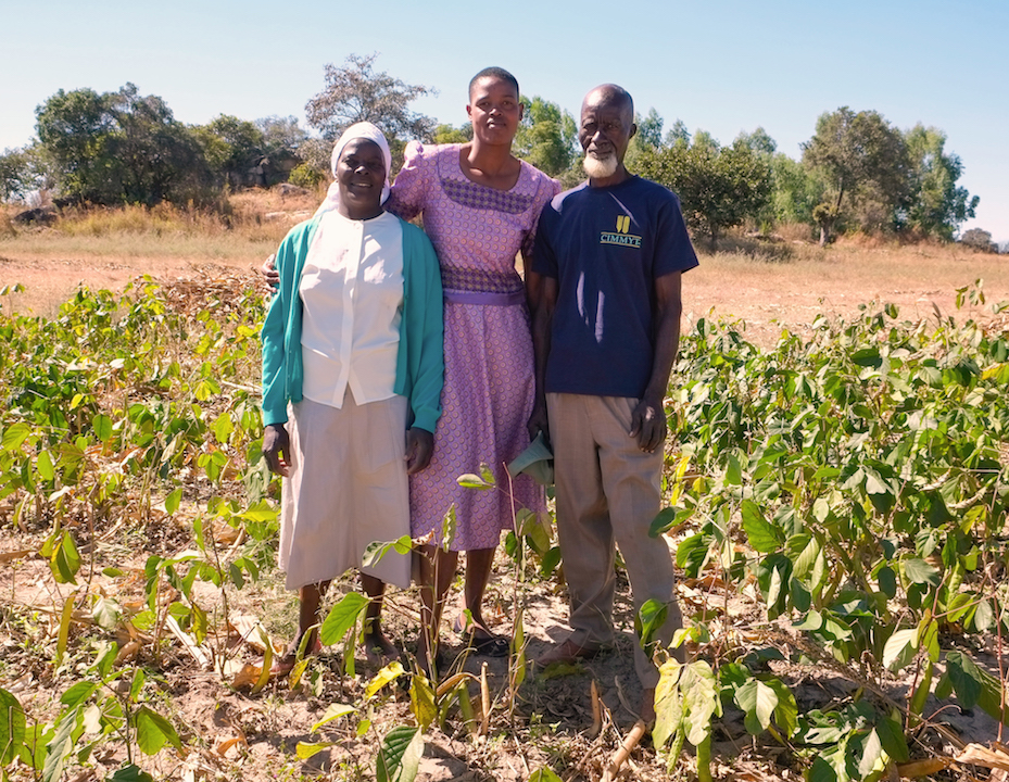 Honest and Eveline Musafari with extension worker, Memory Chipinguzi. Neighbors have noticed the intercropping trials on the Musafari's farm and are beginning to adopt the practice to gain similar benefits. (Photo: Matthew O'Leary/CIMMYT)