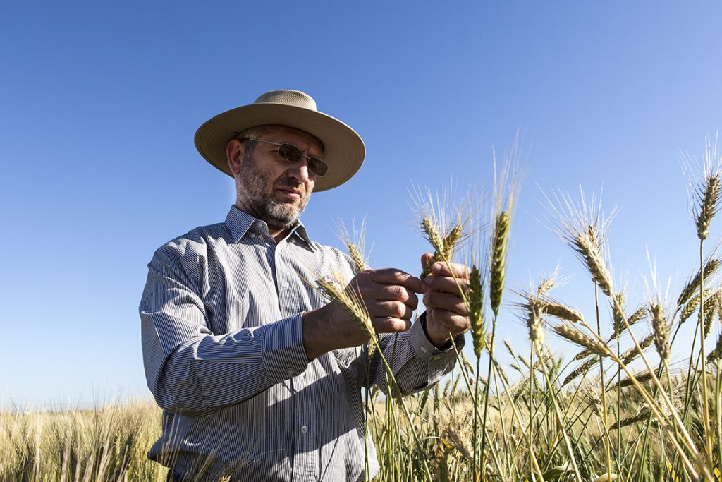 CIMMYT scientist Matthew Reynolds has been appointed a member of the Mexican Academy of Science.