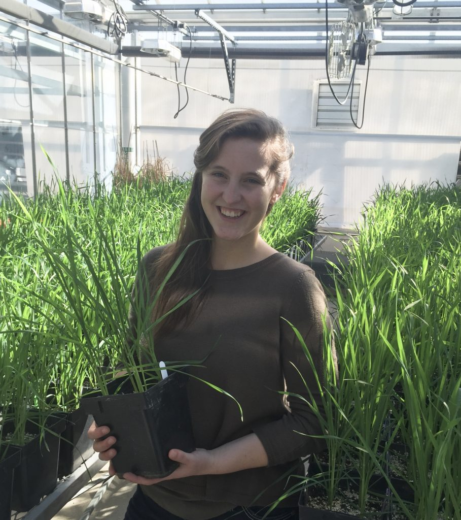 Tessa Mahmoudi, plant microbiologist and 2012 World Food Prize Borlaug-Ruan summer intern, credits the mentorship of CIMMYT researchers in Turkey with changing her outlook on the potential of science to improve food security and health. (Photo: University of Minnesota)