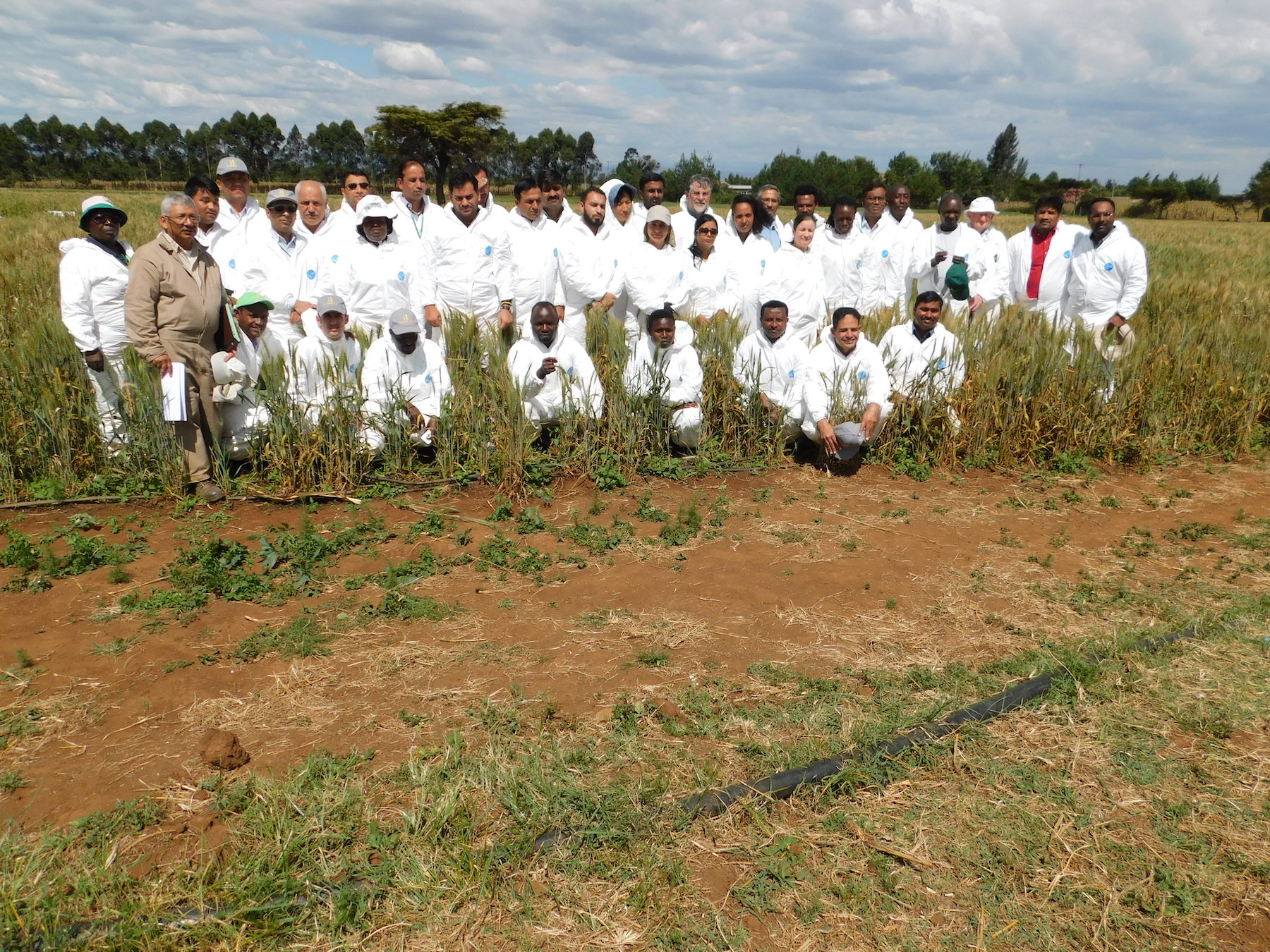 Participants of the wheat stem rust training pose for a group photograph. (Photo: KALRO)