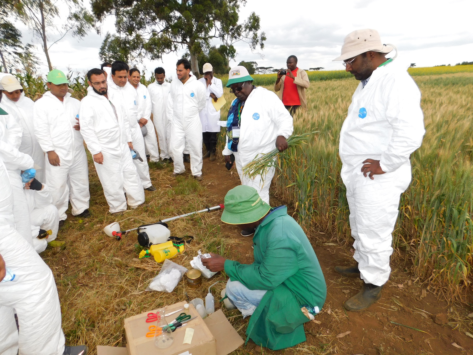 Scientists Ruth Wanyera (center) and Mandeep Randhawa (right) demonstrate stem inoculation devices. (Photo: KALRO)