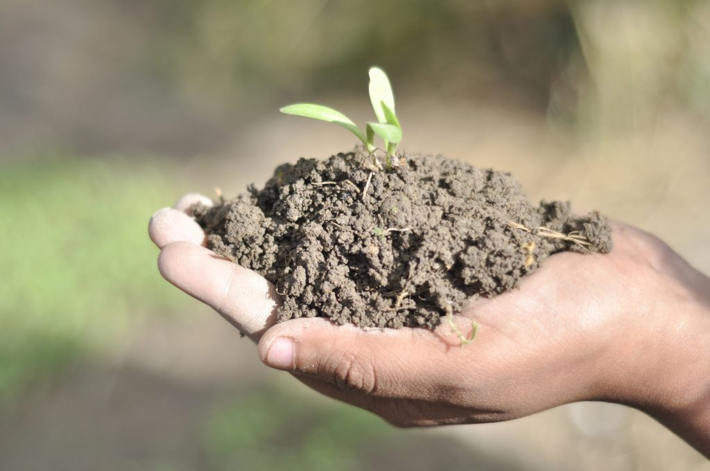 If we take care of our soils, our soils will take care of us. (Photo: Shashish Maharjan/CIMMYT)