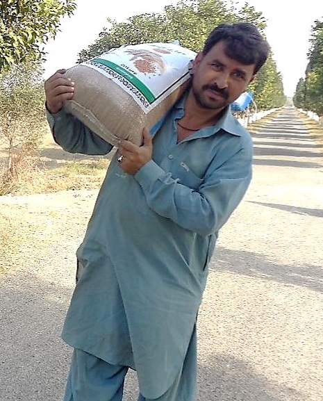 The road to better food security and nutrition seems straighter for farmer Munsif Ullah and his family, with seed of a high-yielding, zinc-enhanced wheat variety. (Photo: CIMMYT/Ansaar Ahmad)