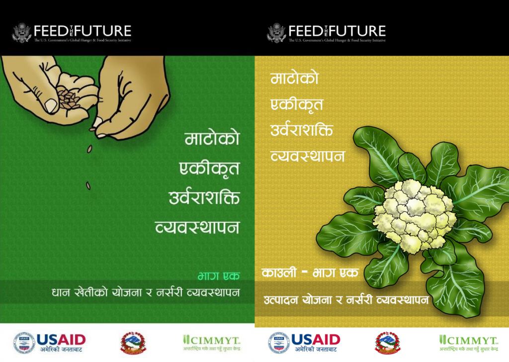 Agricultural extension materials on best management practices for rice (left) and cauliflower, developed by CIMMYT as part of the NSAF project.