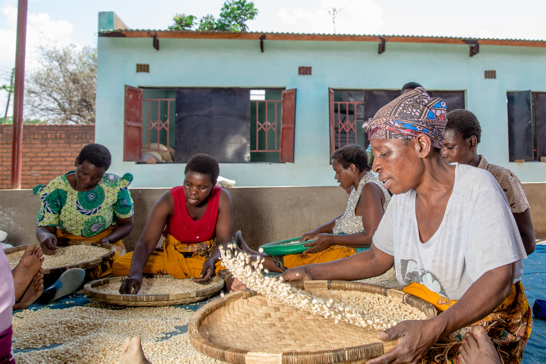 Workers at Mgommera seed firm in Malawi sort out seed. (Photo: KipenzFilms/CIMMYT)