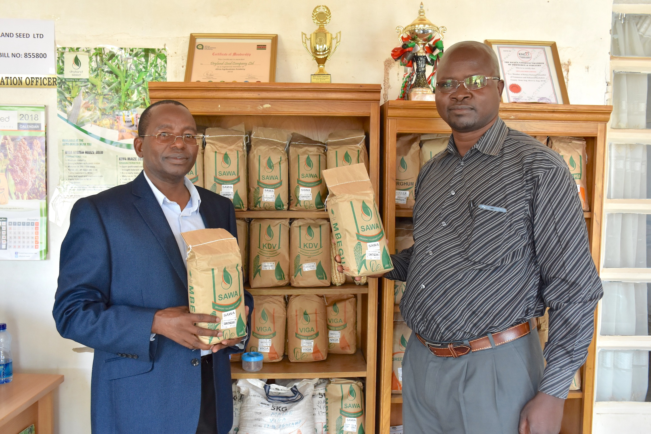 The managing director of Dryland Seed, Ngila Kimotho (left), shows packages of SAWA maize seeds at the company's office. (Photo: Jerome Bossuet/CIMMYT)