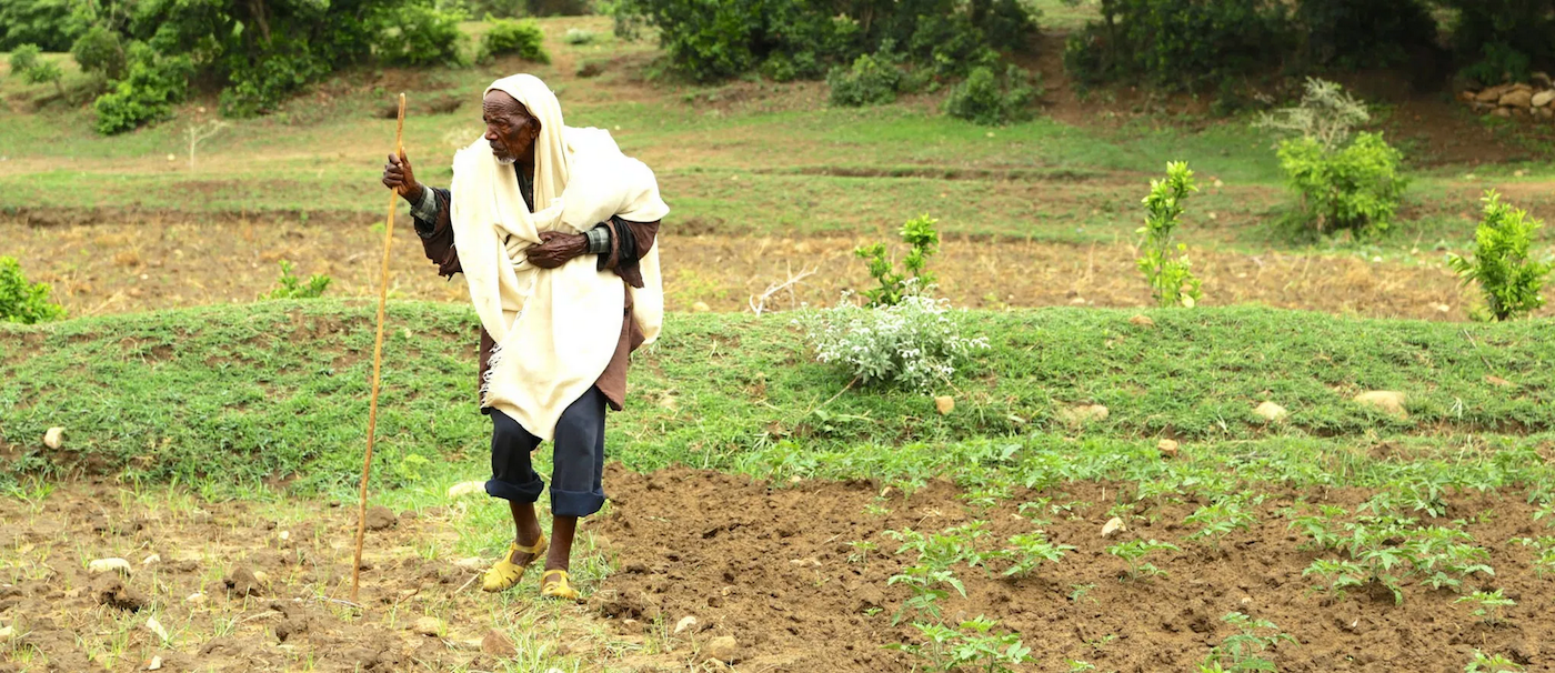 Recent research in Southern Ethiopia found that agricultural areas with the highest tree cover also experienced the most productivity in crop, feed and fuel. (Photo: Mokhamad Edliadi/CIFOR)