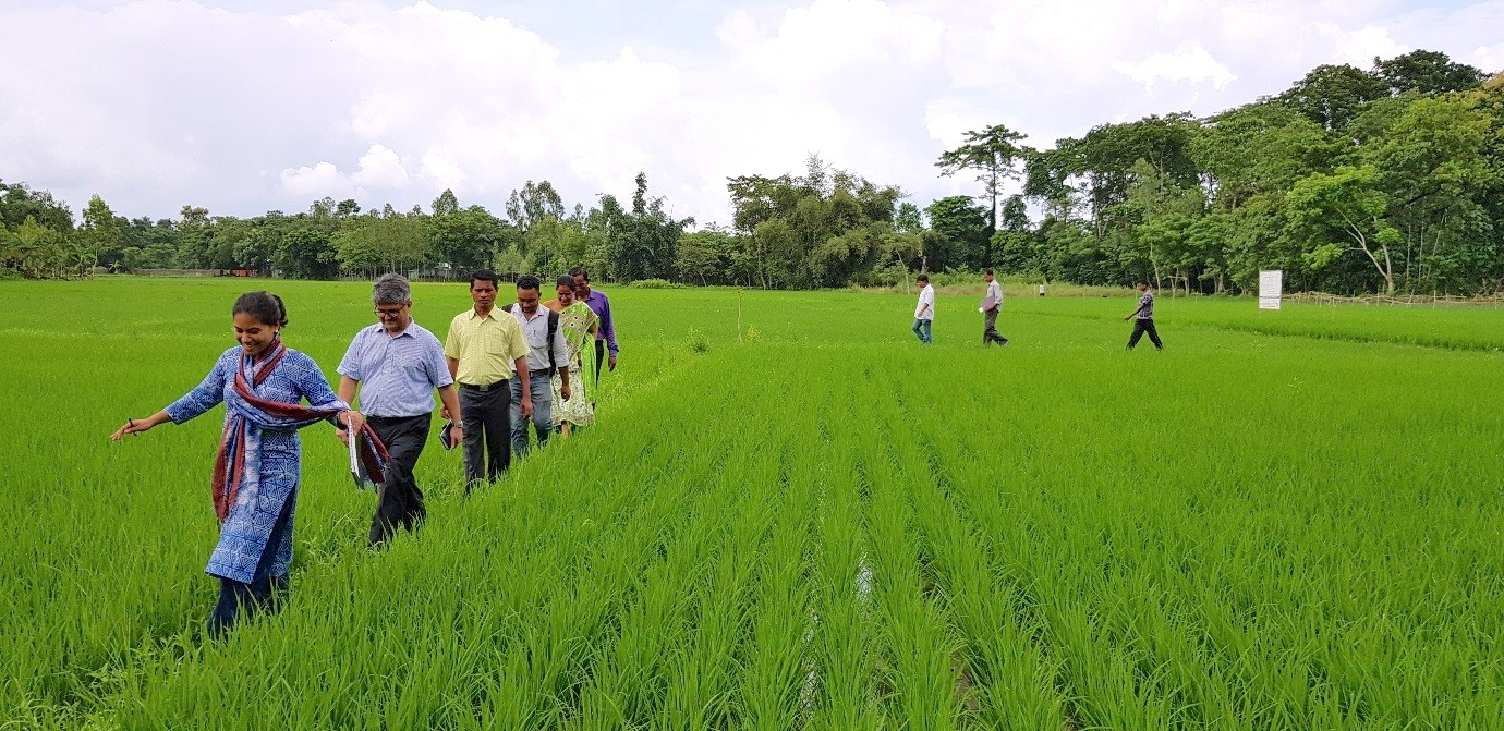 CIMMYT's SRFSI team and the community walk through the fields during a field visit in Cooch Behar.