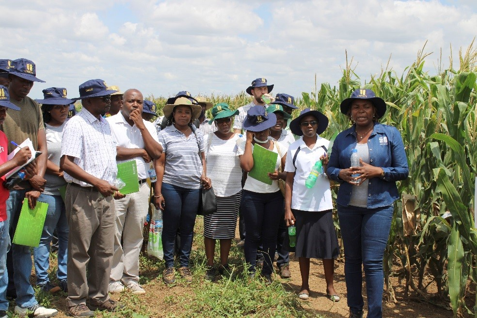 Thokozile Ndhlela (first from right) shares advances in provitamin A maize breeding in Zimbabwe. (Photo: Shiela Chikulo/CIMMYT)