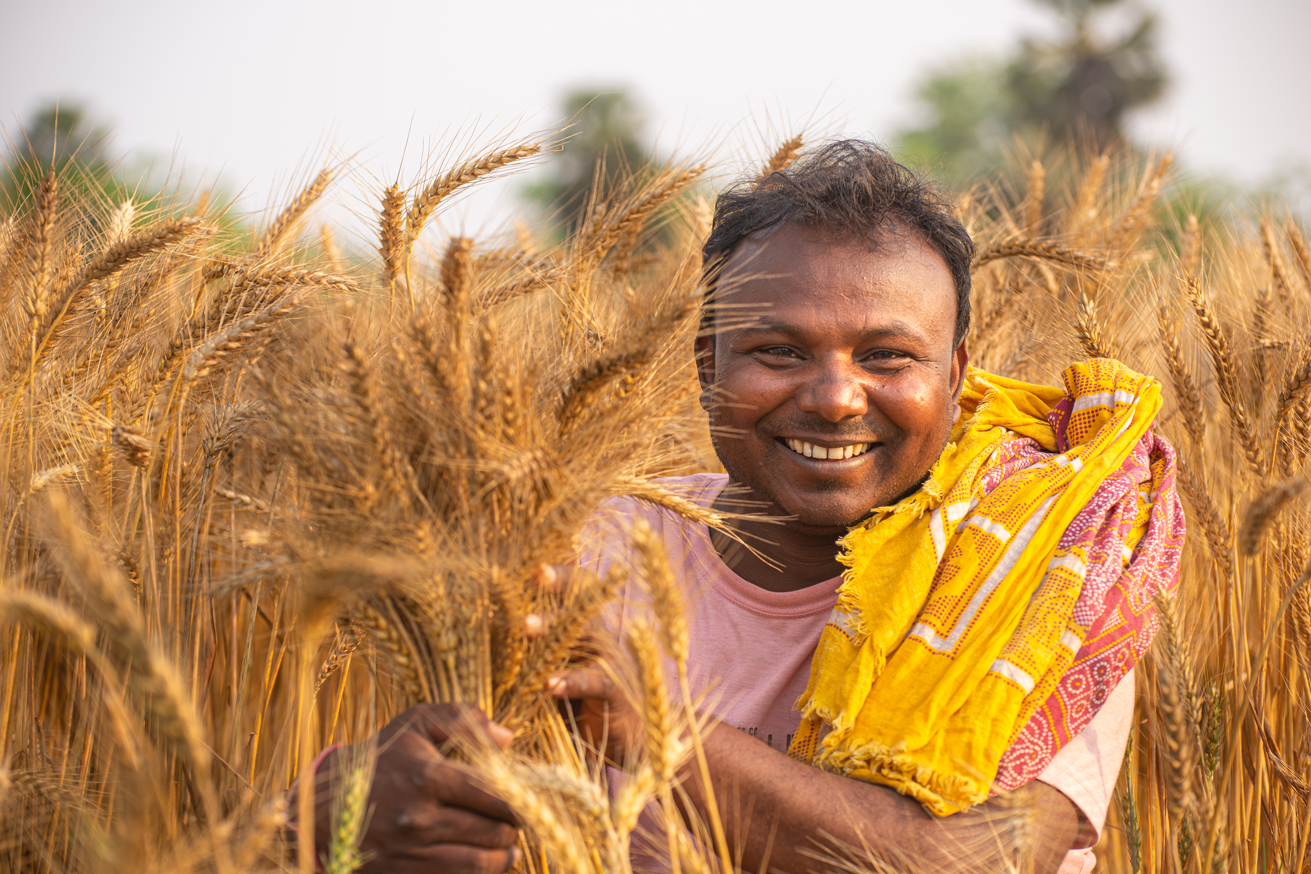 India's farmers feed billions of people, while fighting pest and weather related uncertainties. Is it too much to ask them to change their behavior and help support air quality with the food they grow? (Photo: Dakshinamurthy Vedachalam/CIMMYT)