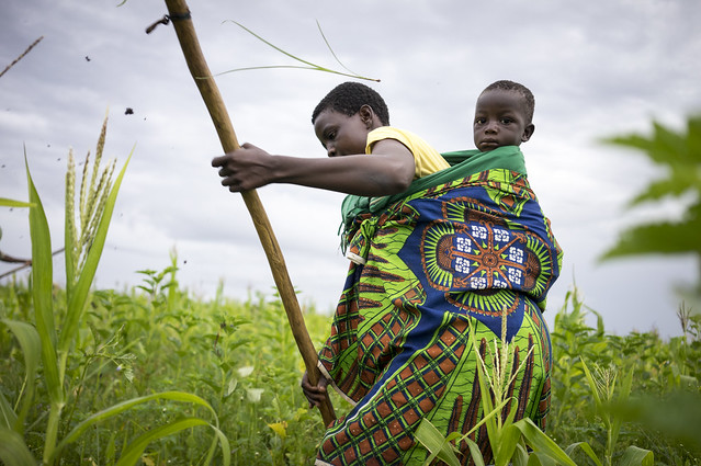 A farm worker carrying her baby on her back weeds maize in Tanzania. (Photo: Peter Lowe/CIMMYT)