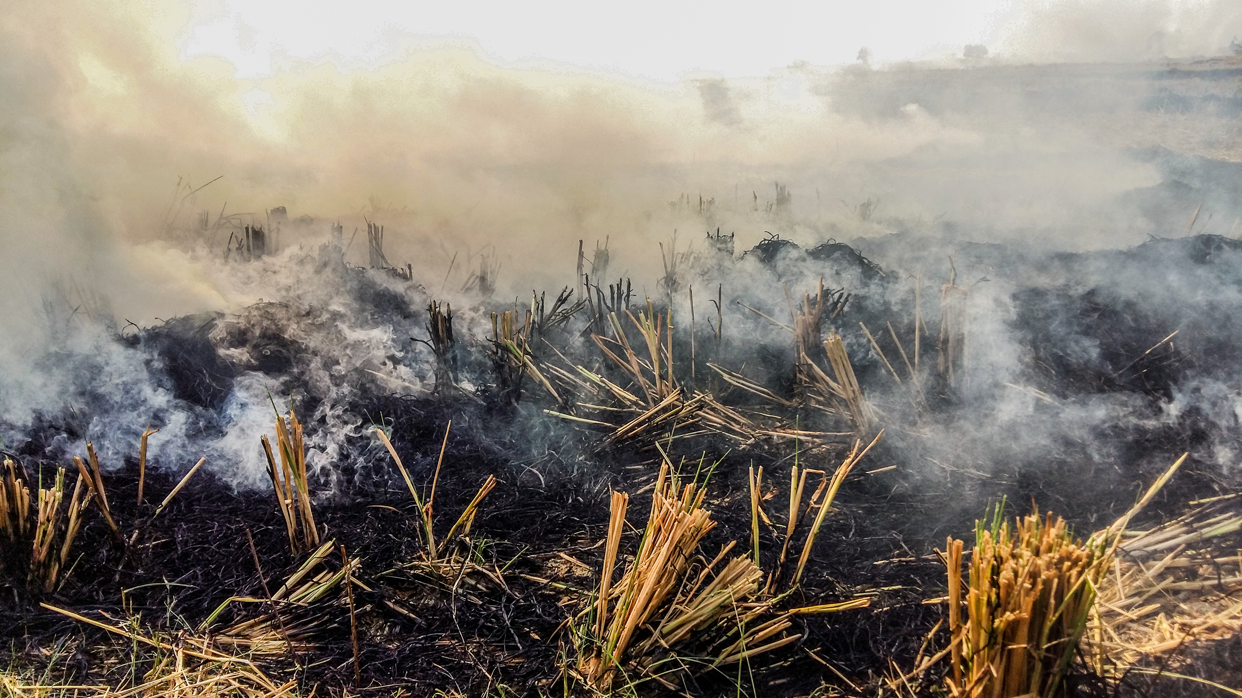 The burning of crop residue, or stubble, across millions of hectares of cropland between planting seasons is a visible contributor to air pollution in both rural and urban areas. (Photo: Dakshinamurthy Vedachalam/CIMMYT)