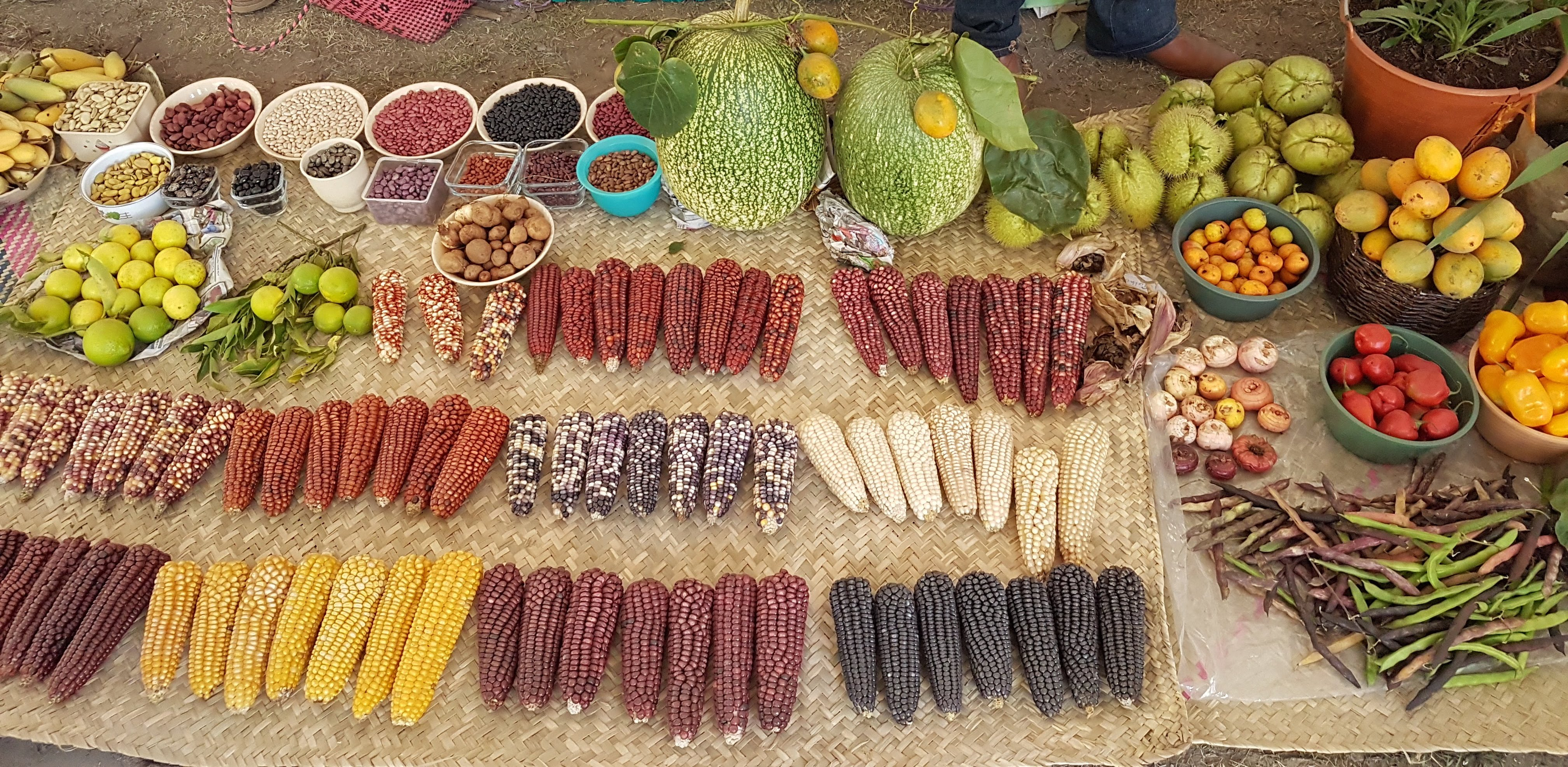Traditional milpa products: native maize, beans, squash, chilies and other local fruits and vegetables. (Photo: Martha Willcox/CIMMYT)