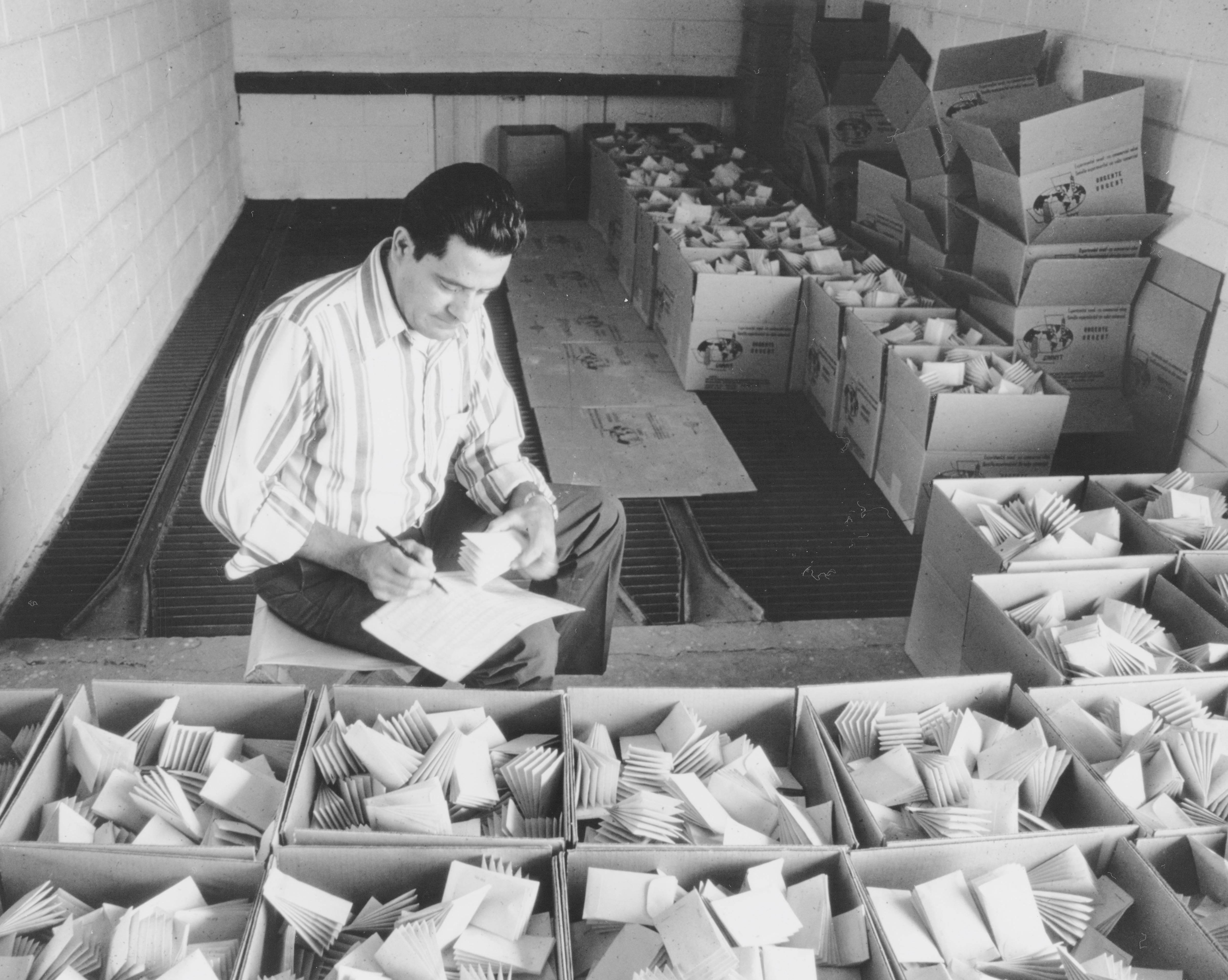 Maximino Alcalá de Stefano working at CIMMYT's wheat international nurseries. (Photo: CIMMYT)