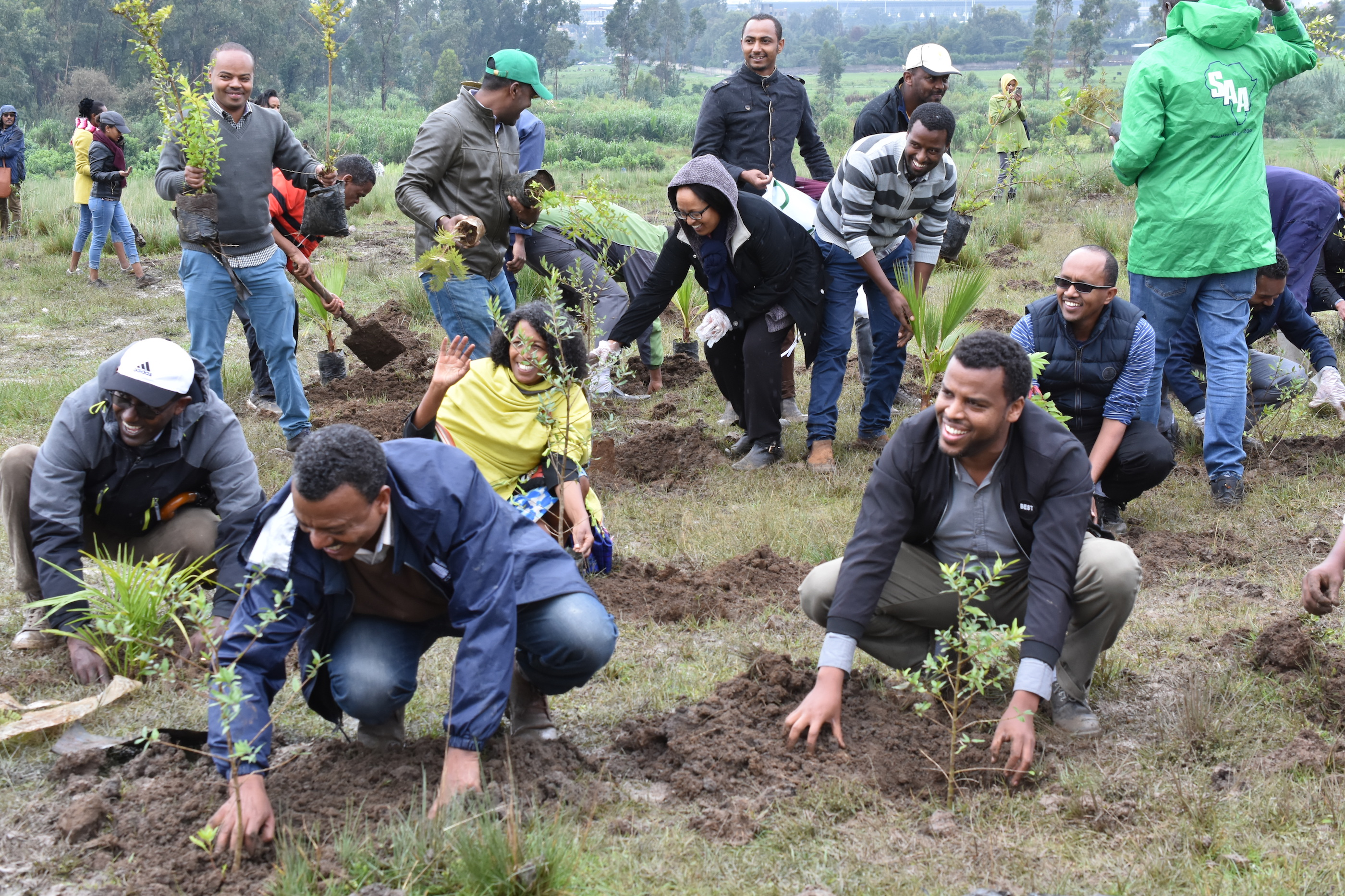 CIMMYT and CGIAR staff members put their tree seedlings in the ground. (Photo: CIMMYT)
