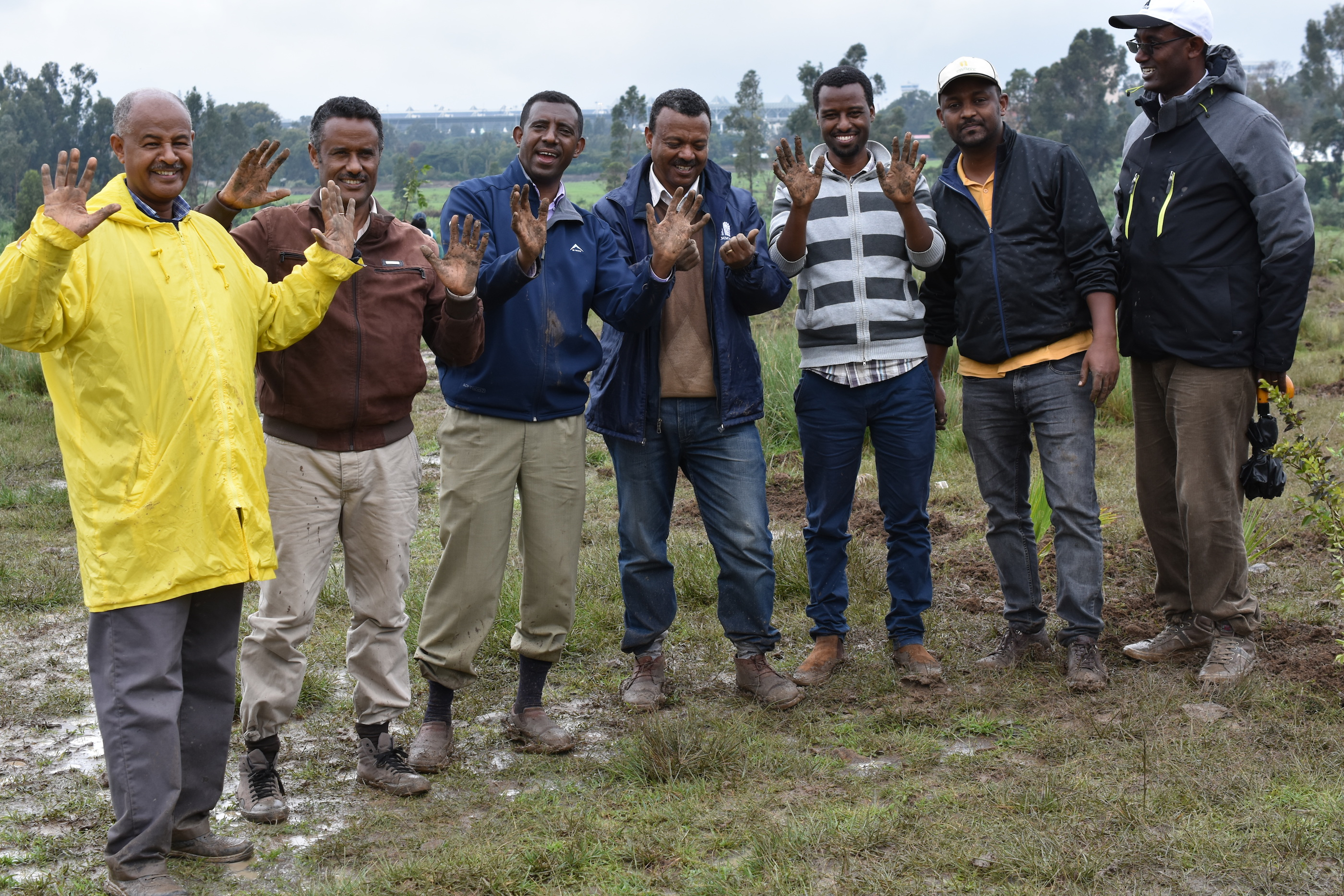 CIMMYT staff show their hands full of dirt after planting tree seedlings in Bole subcity, near Addis Ababa's international airport. (Photo: CIMMYT)