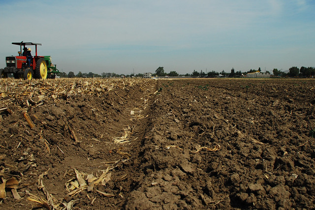 A multi-crop, multi-use zero-tillage seeder at work on a conservation agriculture trial plot, left, at CIMMYT's headquarters in Texcoco, Mexico. The residues retained on the soil surface and the permanent raised beds are in clear contrast with the conventional plot on the right. (Photo: CIMMYT)