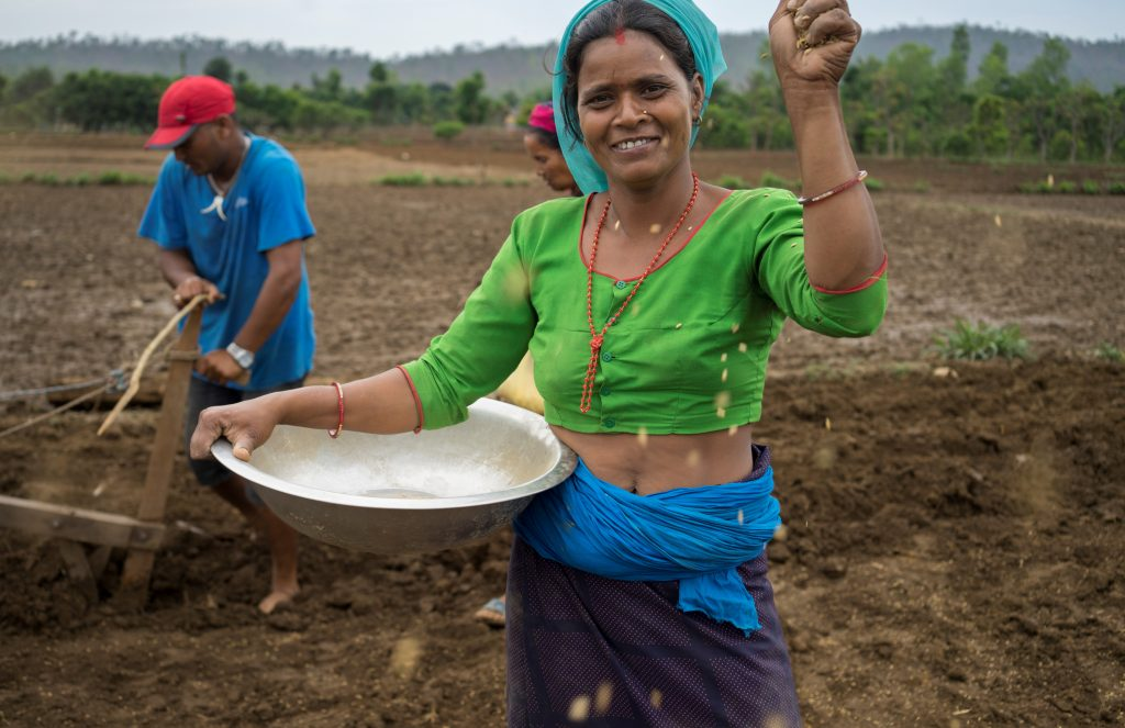 Farmer Kausila Chanara direct dry seeding rice in Ramghat, Surkhet, Nepal. (Photo: Peter Lowe/CIMMYT).