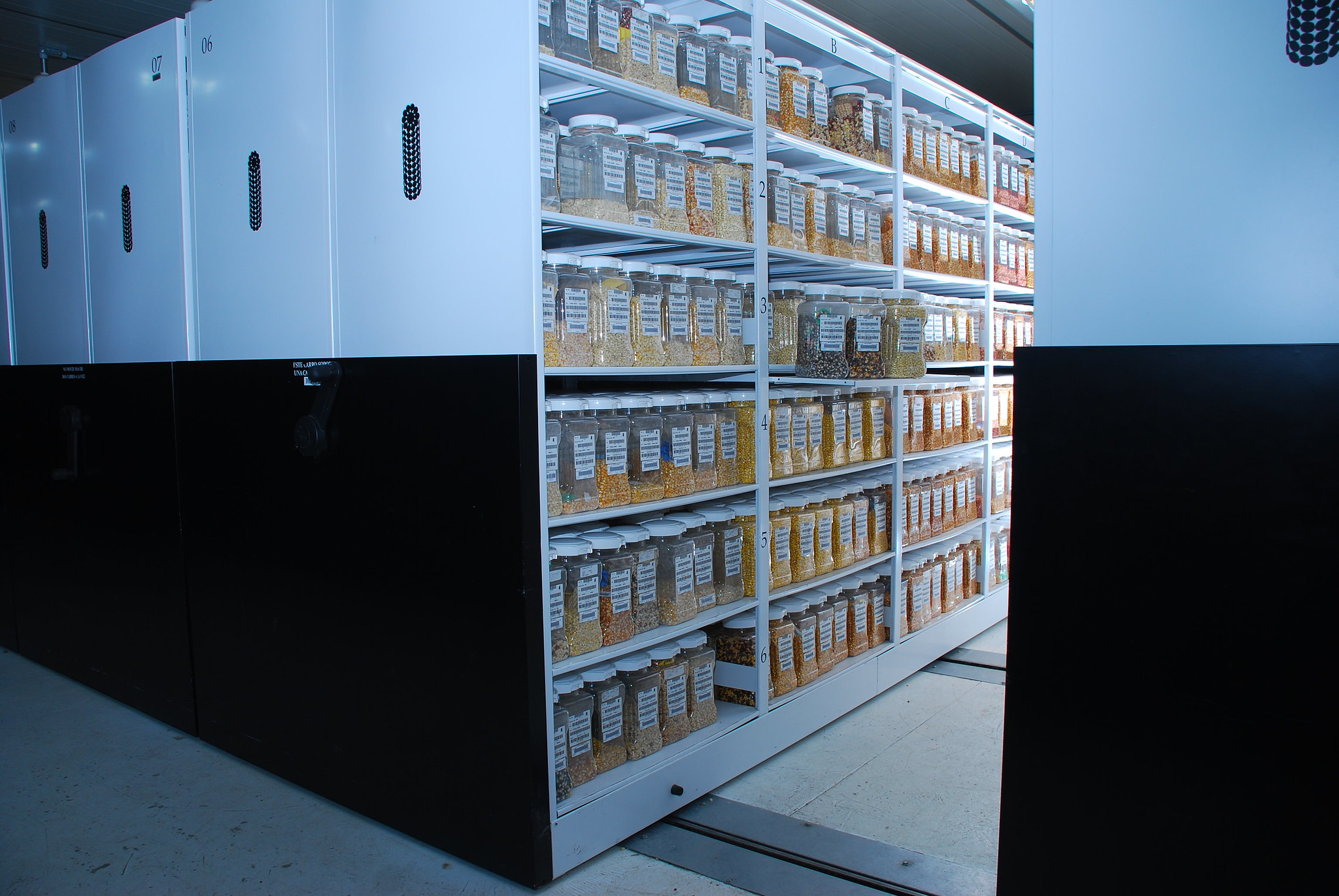 Shelves filled with maize seed samples make up the maize active collection in the Wellhausen-Anderson Plant Genetic Resources Center at CIMMYT's global headquarters in Texcoco, Mexico. Disaster-proof features of the bank include thick concrete walls and back-up power systems. (Photo: Xochiquetzal Fonseca/CIMMYT)