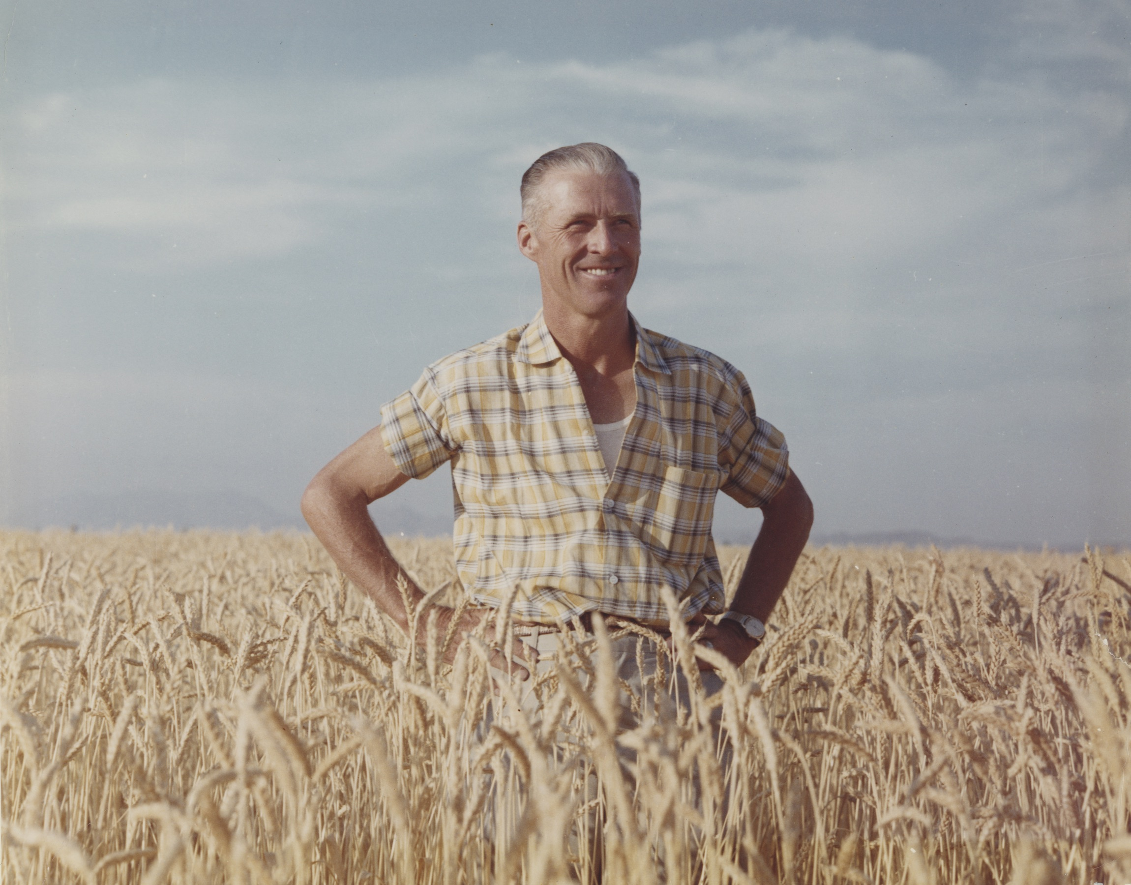 Norman E. Borlaug stands on a wheat field in Ciudad Obregón, Sonora state, Mexico. (Photo: CIMMYT)