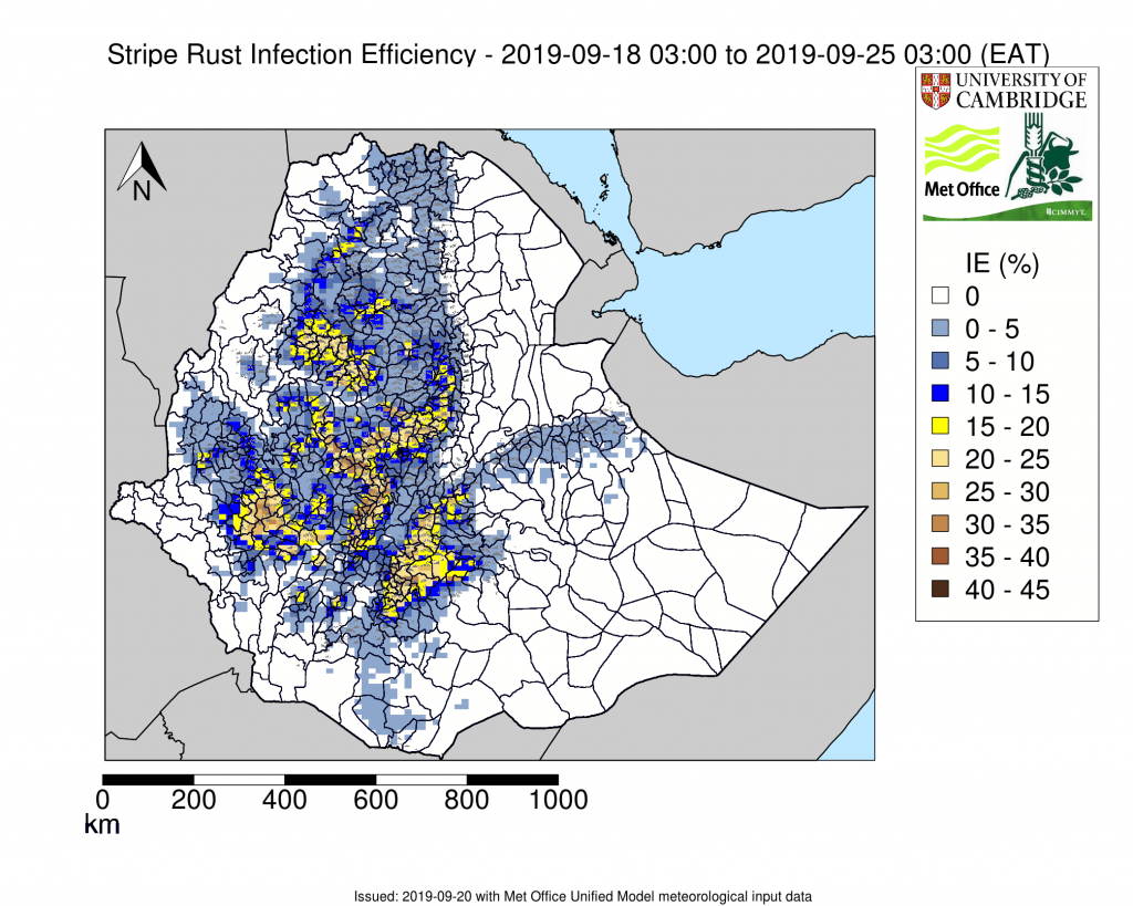 Example of weekly stripe rust environmental suitability forecast. Yellow to Brown show the areas predicted to be most suitable for stripe rust infection. (Graphic: University of Cambridge/UK Met Office)