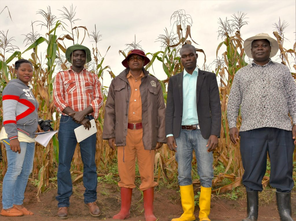 From left to right: Winnie Nanteza, National Crops Resources Research Institute (NaCCRI) communications officer; Daniel Bomet, NARO maize breeder; Byakatonda Tanazio, Assistant Superintendent of Prisons, Lugore Prison, Gulu; Aniku Bernard, Farm Manager at Lugore Prison; and Godfrey Asea, director of NaCRRI, stand for a group photo at the foundation seed production farm inside Lugore Prison. (Photo: Joshua Masinde/CIMMYT)