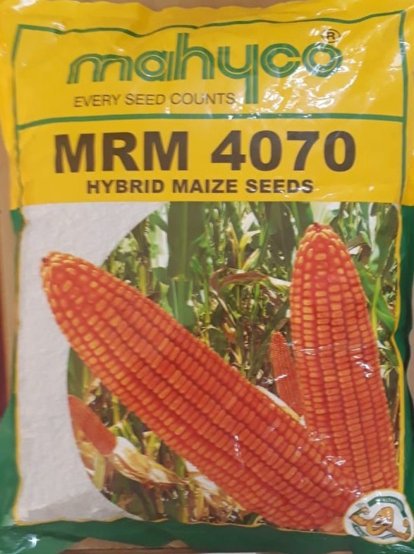 A pack of MHM4070 seed marketed by Mahyco.