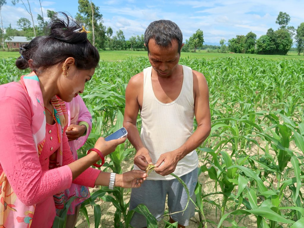 A community volunteer of an agricultural cooperative (left) uses the Plantix smartphone app to help a farmer diagnose pests in his maize field in Bardiya district, Nepal. (Photo: Bandana Pradhan/CIMMYT)