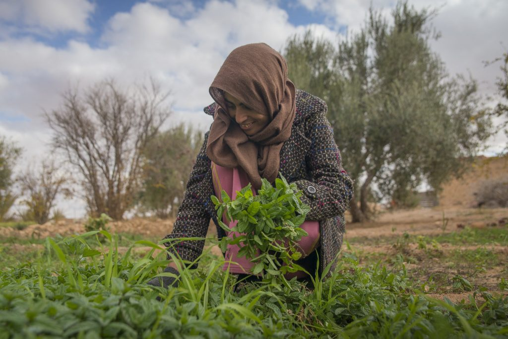 Vegetable gardening in Tunisia. (Photo: ICARDA)