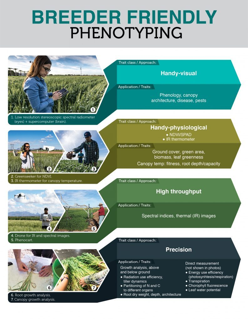 Examples of different classes and applications of breeder friendly phenotyping. (Image: M. Reynolds et al.)