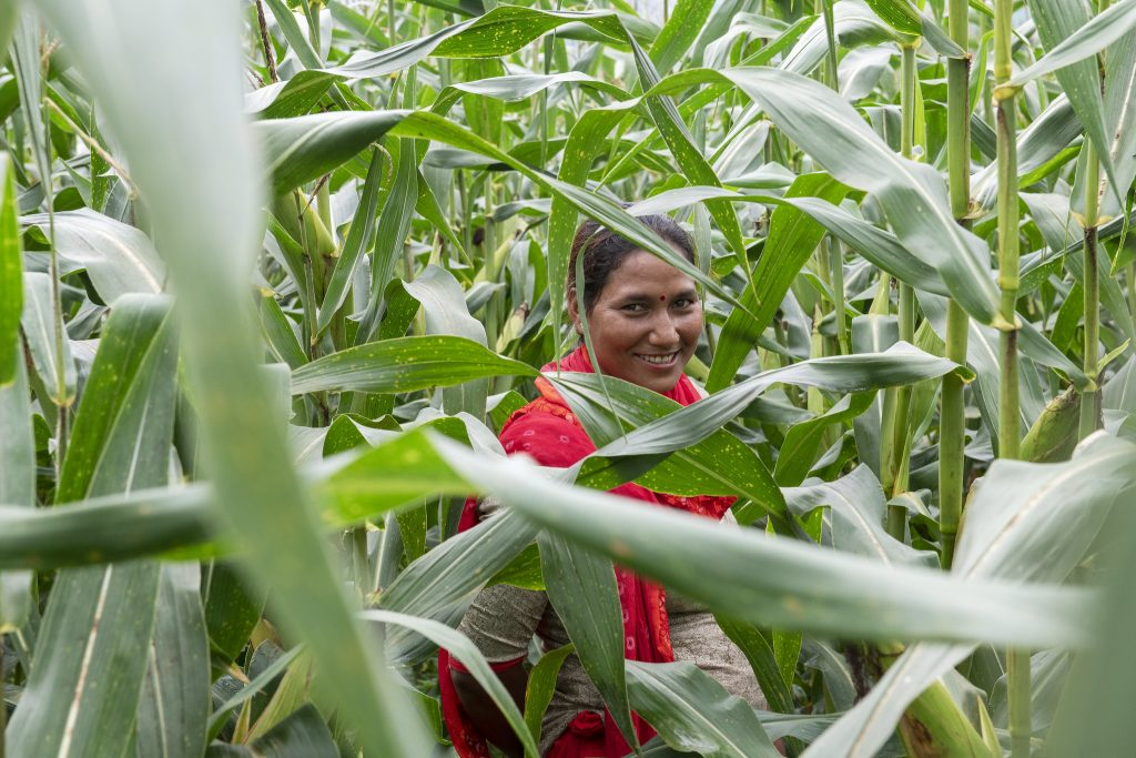 Sita Kumari, a farmer, stands on a maize field in Nepal. (Photo: C. de Bode/CGIAR)