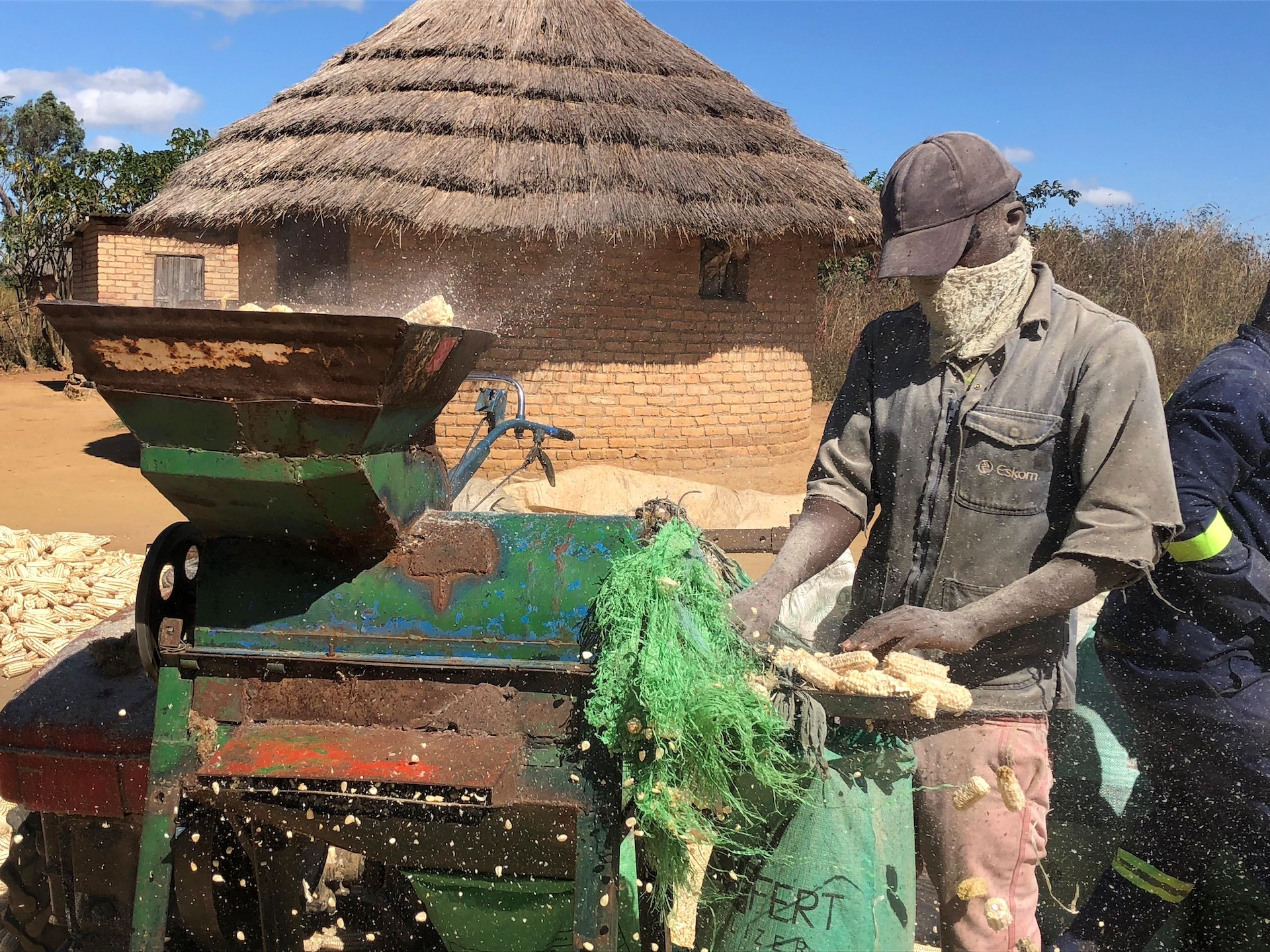 Masimba Mawire collects bare maize cobs after removing the grain using a mechanized maize sheller in Zimbabwe. (Photo: Matthew O'Leary/CIMMYT)