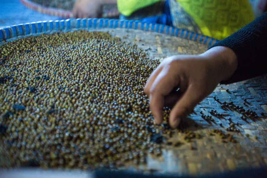 After mung bean is toasted, employees at Poshan Foods select the beans. (Photo: Merit Maharajan/Amuse Communication)