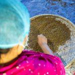 An employee selects mung beans at Poshan Foods, in Butwal, Nepal. (Photo: Merit Maharajan/Amuse Communication)