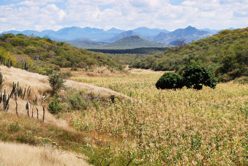 In the dry and mountainous terrain surrounding the village of Tonahuixtla, native maize preservation and reforestation efforts have been key in protecting the local environment and culture. (Photo: Denise Costich/CIMMYT)