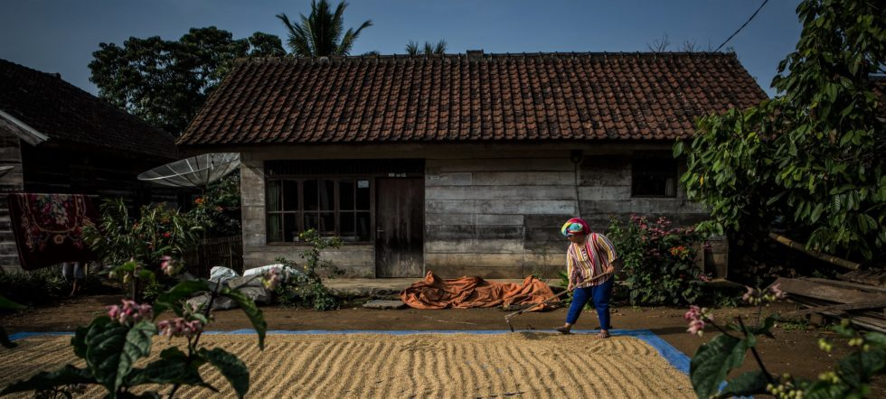 A paddy in front of a house in Tri Budi Syukur village, West Lampung regency, Lampung province, Indonesia. (Photo: Ulet Ifansasti/CIFOR)