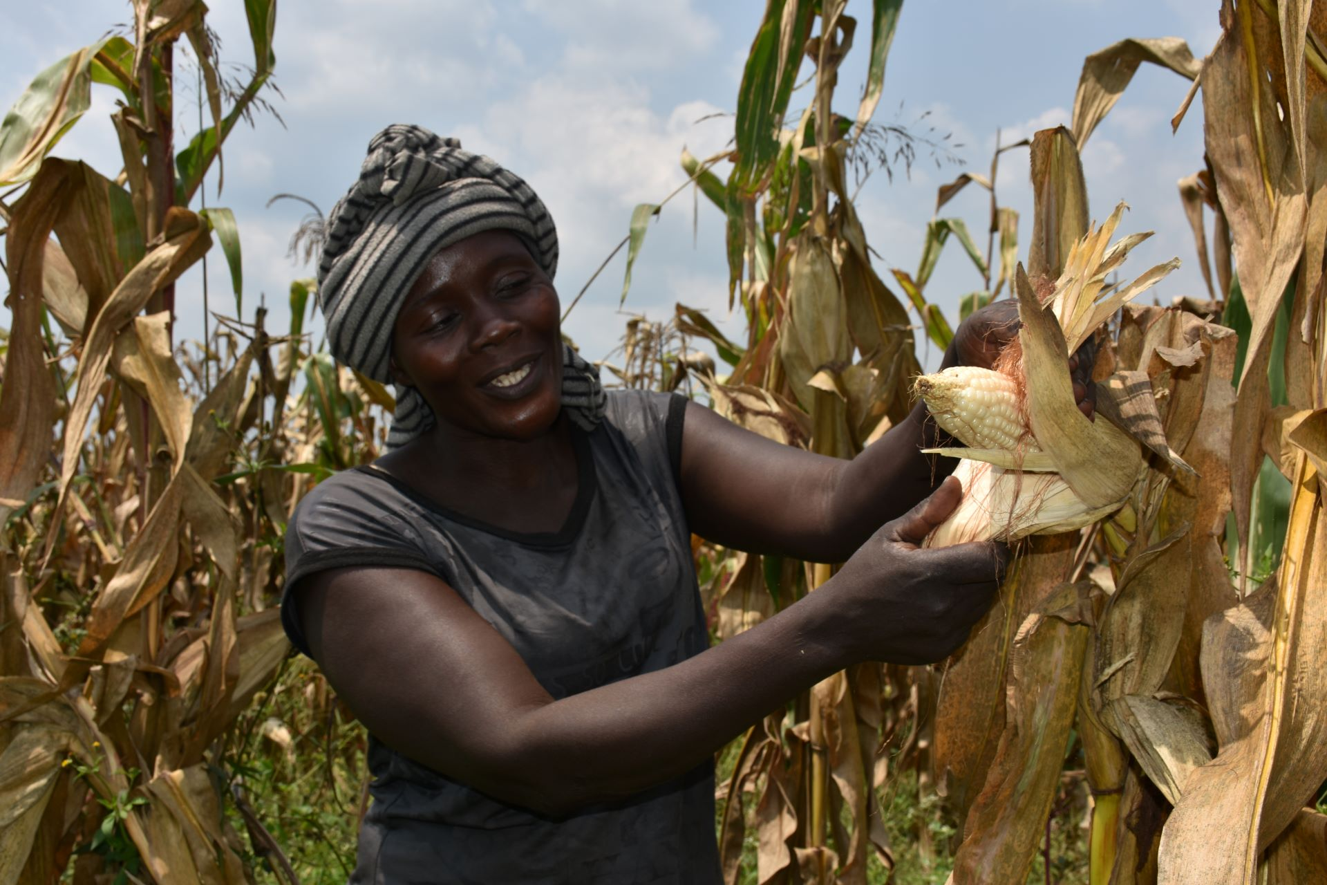 Alinda Sarah demostrates how happy she is with the maize cob due for harvest on the farm she owns with her husband in Masindi, mid-western Uganda. (Photo: Joshua Masinde/CIMMYT)