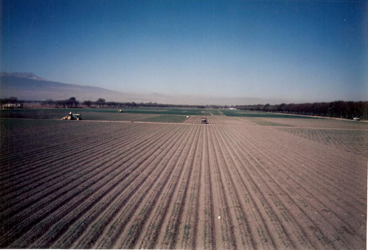 Early landscape of wheat fields at Toluca station (Photo: Fernando Delgado/CIMMYT)