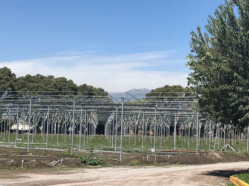 Recent progress of the rapid generation advancement facility under construction at Toluca station. (Photo: Suchismita Modal/CIMMYT)