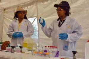Anne Wangui, Maize Seed Health Technician, demonstrates how to test maize plants for maize dwarf mosaic virus (MDMV). (Photo: Joshua