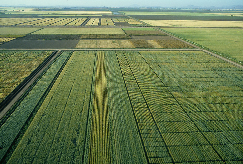 Cover photo: Wheat fields at CIMMYT's Campo Experimental Norman E. Borlaug (CENEB) in Ciudad Obregón, Mexico. (Photo: CIMMYT)