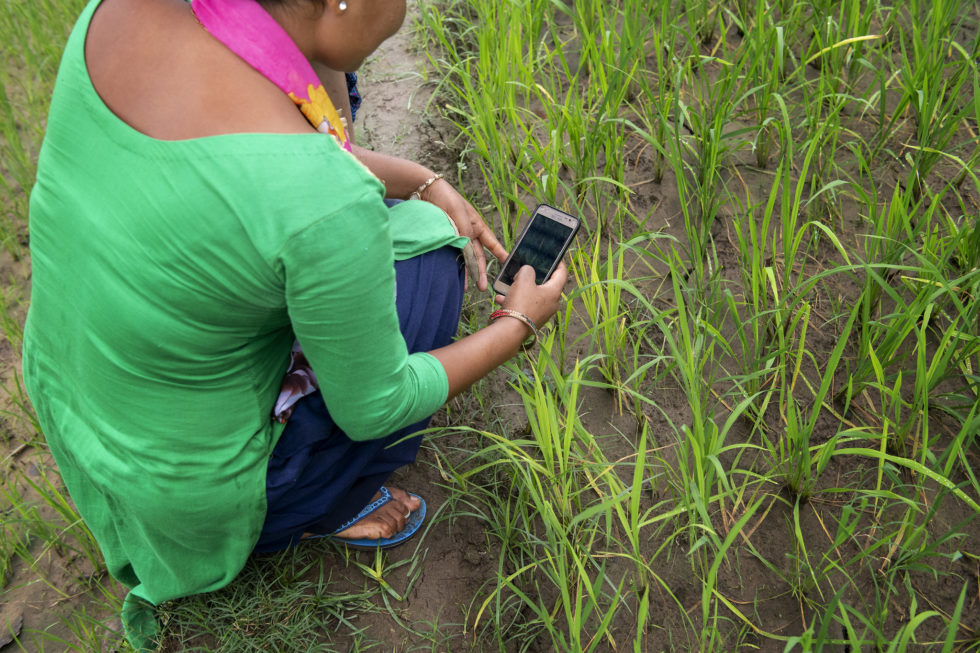Farmer uses mobile phone in field.