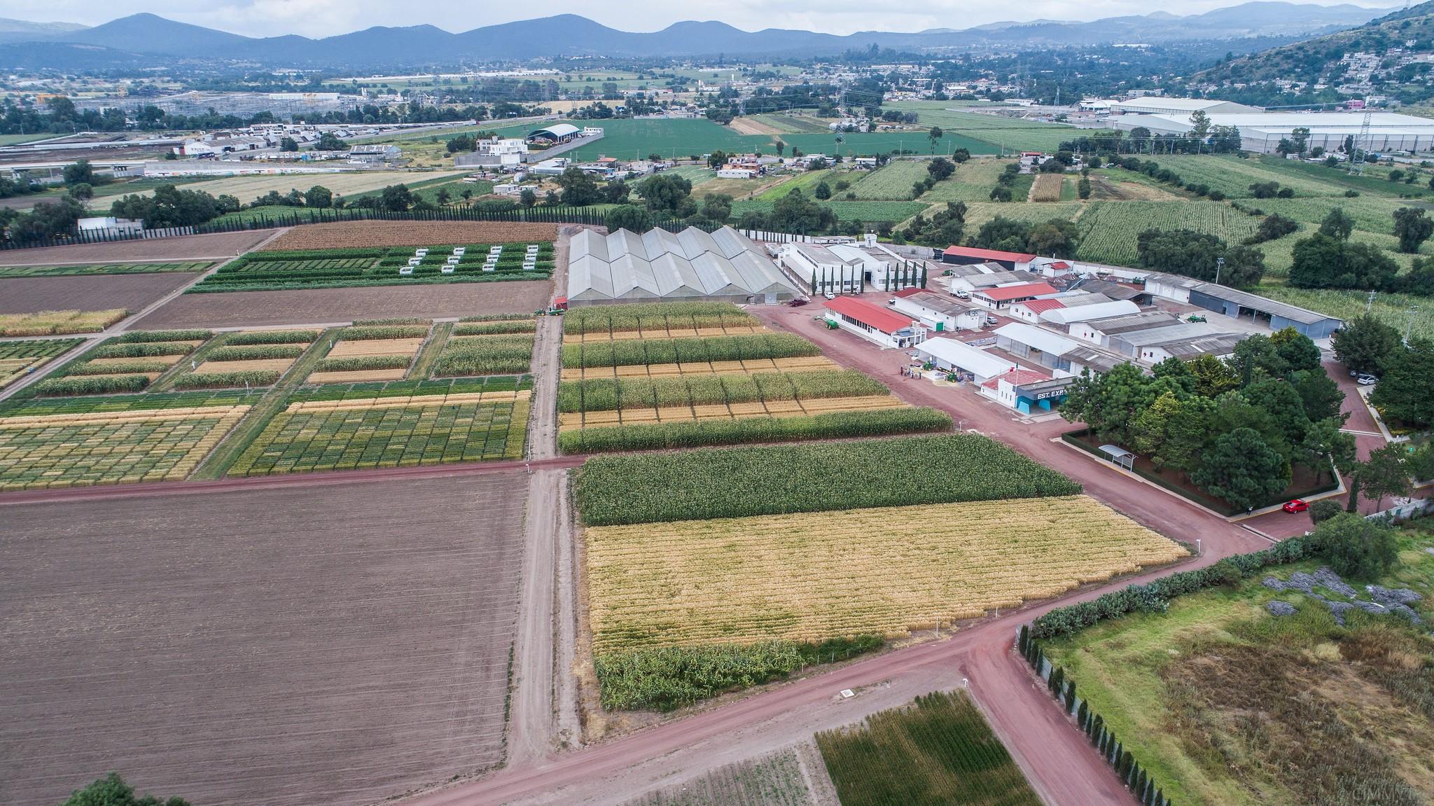 Maize and wheat fields at CIMMYT's El Batán experimental station.