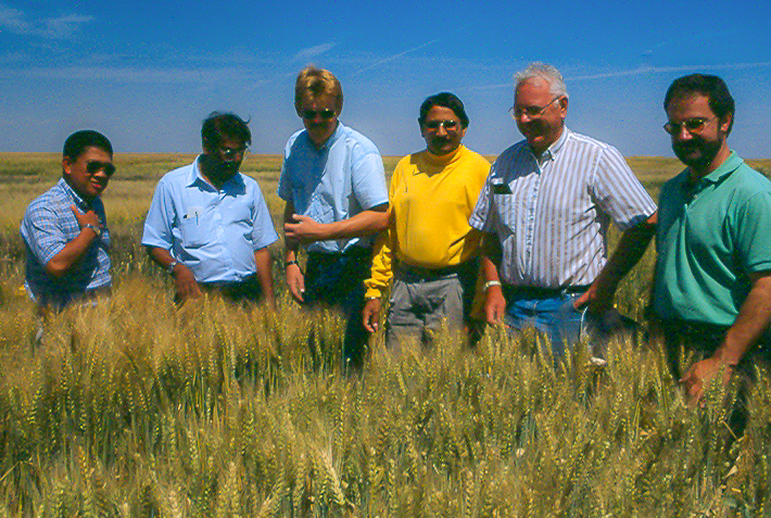 Hans Braun (right) and colleagues in a wheat field in CIMMYT's experimental station in Ciudad Obregón, Sonora, Mexico. (Photo: CIMMYT)